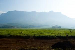 Teefelder am Fuße von Mount Mulanje im Süden Malawis, Copyright Johannes Schäfer
