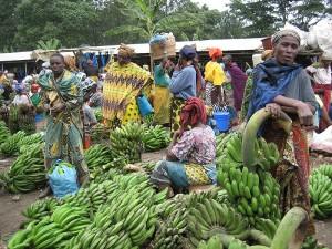 Frauen verkaufen Kochbananen auf dem Markt von Tangeru - Copyright: Fanny Schertzer