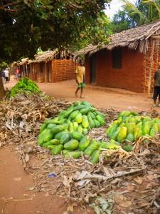 Papaya-Ernte im Rufiji-Distrikt - Copyright: eufrika.org
