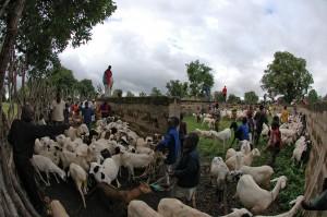 Auch die intensive Viehhaltung wie hier in Mali trägt zum Vordringen der Wüste bei. Wasser ist wie hier in Burkina Faso knapp  © Justin Weaver