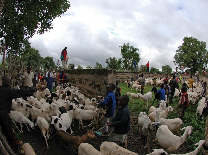Sahelzone droht Hunger – Oxfam