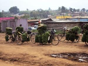 Fahrräder sind in manchen ländlichen Gegenden nachwievor das einzig verfügbare Transportmittel - Copyright: eufrika.org