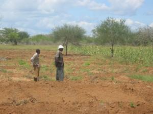 ... und dürre Böden: Tansanias Landwirtschaft ist besonders anfällig für Wind und Wetter - Copyright: Alexander Johmann