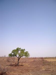 Mit dem Verschwinden der Bäume weicht die Sahelzone immer mehr der Wüste. © Marco Bellucci