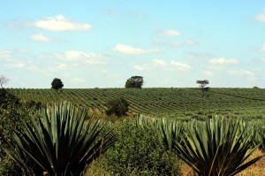 Sisal-Plantage in der Nähe von Tanga - Copyright: eufrika.org