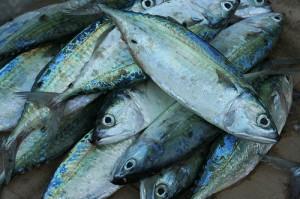 Fish catched off the coast of Zanzibar, Copyright: Imke Stahlmann