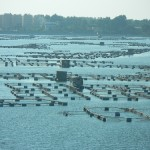 Large tilapia cages near Alexandria, Egypt, Copyright: Graeme Macfadyen (Poseidon), 2011, The World Fish Centre