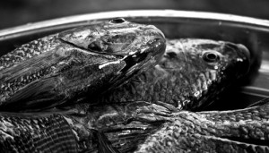 In Lake Naivasha, Talapia is mainly overfished, Copyright: ESKEIFOTOS