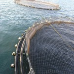Fish Cages in Lake Malawi, Copyright: Jamie Oliver, 2008, The World Fish Center