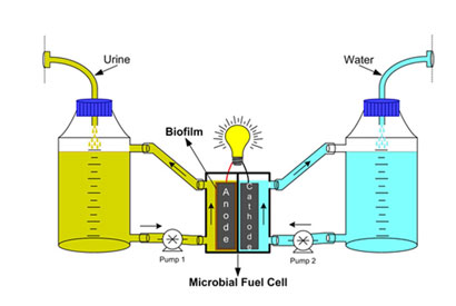 The microbial fuel cell metabolises organic compounds in urine to produce electricity. © RSC