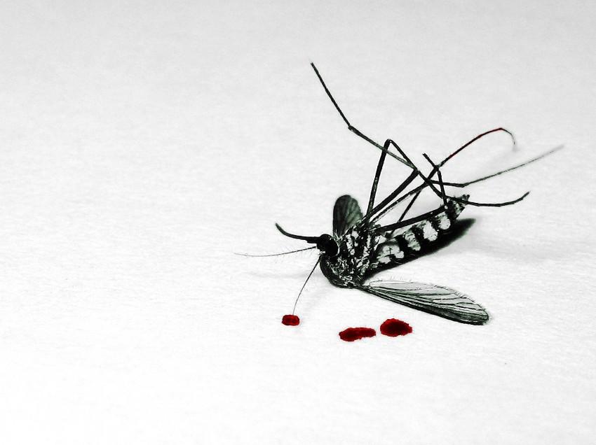 """Faso Soap"" keeps off malaria mosquitoes"