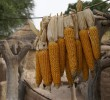 Food security: The 'old' versus the 'new' policy discourse